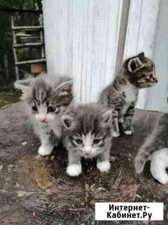 Кошка Томск