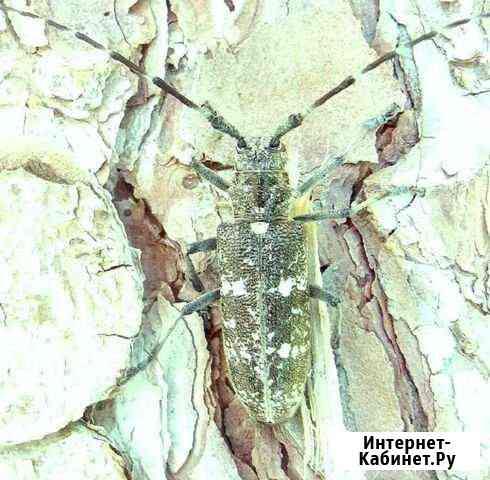 Уничтожение тараканов блох мышей плесени клопов Екатеринбург