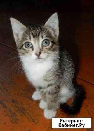 Очаровательный котенок Курган