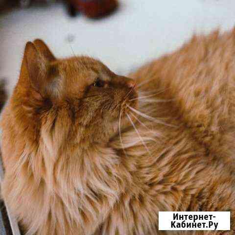 Рыжий кот Йошкар-Ола