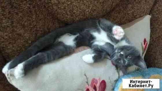 Котята в добрые руки Белгород