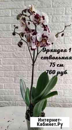 Орхидеи Курган