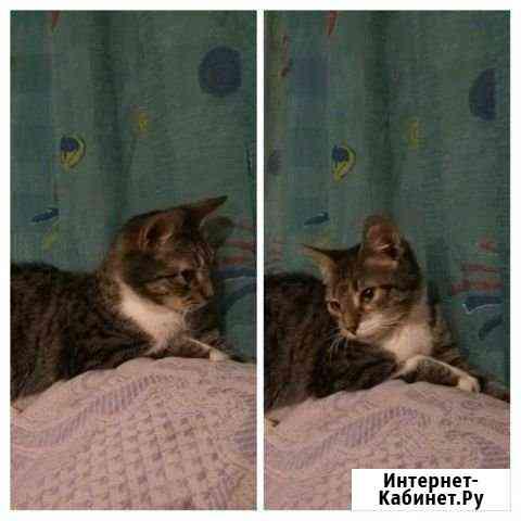 Кошка Белгород
