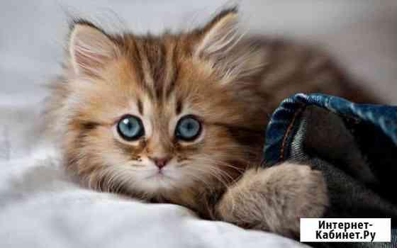 Котёнка в добрые руки Добрунь