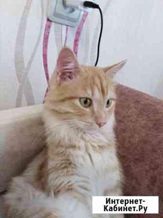 Рыжий кот Нягань
