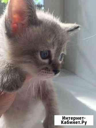Котята отдам Кострома