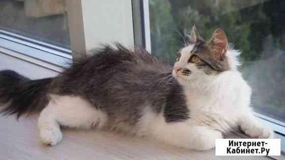 Котёнок кастрирован. Подросток Самара