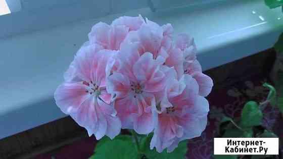 Цветы комнатные Иваново