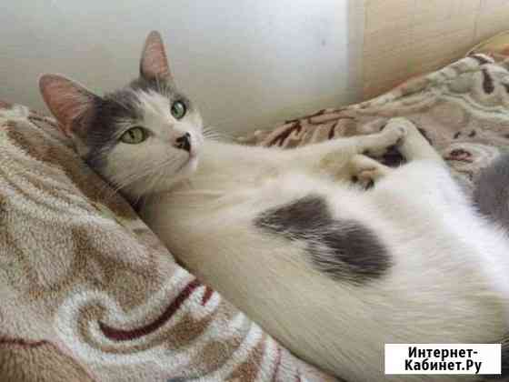 Кошка Кострома