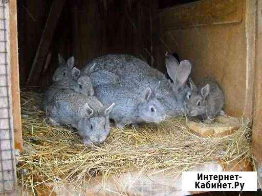 Кролик Алексеевка