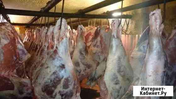 Мясо-говядина Пенза