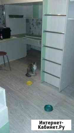 Отдам кошку Челябинск