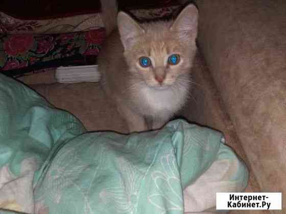 Кошка Сургут