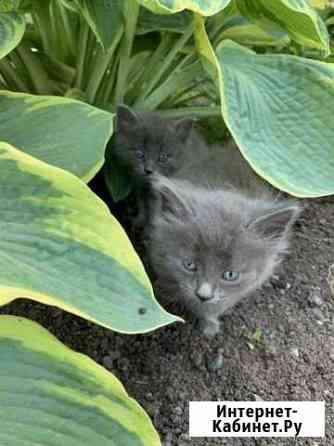 2 котёнка (мальчики) Барда