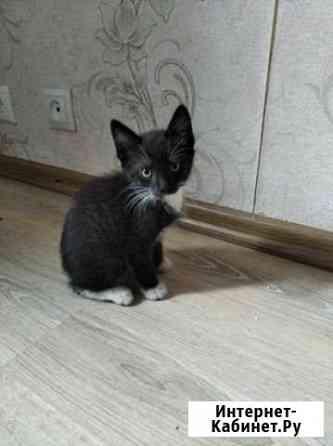 Котёнок Смоленск