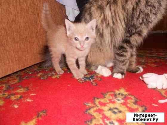 Котик Старый Оскол