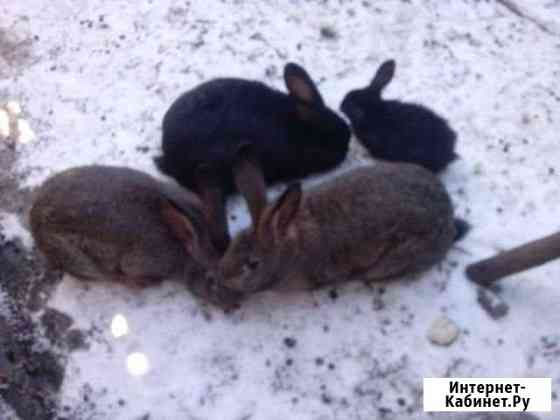 Кролики Шумячи