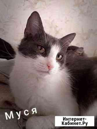 Кошка Владимир
