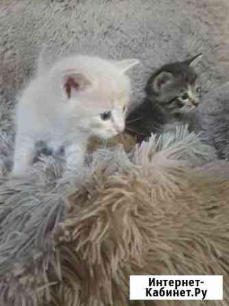 Отдам в хорошие руки котят Курск