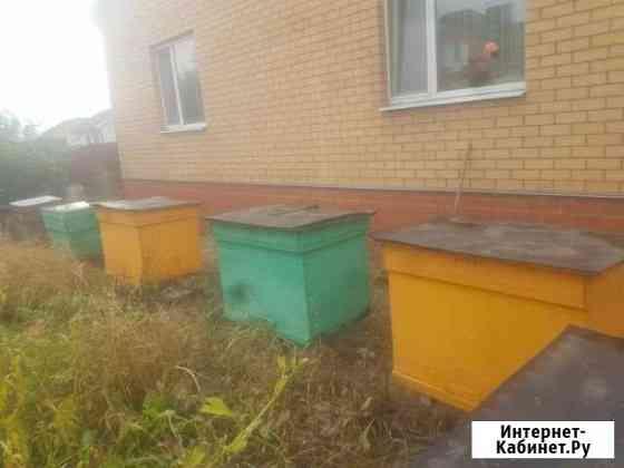 Пчелиные ульи Кромы