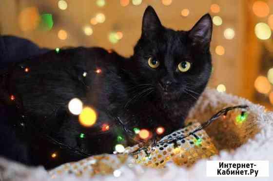 Кошка Кинза ищет дом Калуга