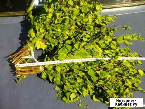 Веники березовые, цена за пару Ялуторовск