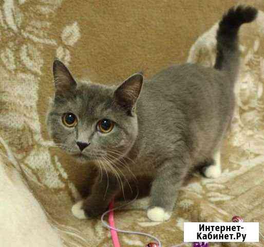 Ищет дом котик Тюмень