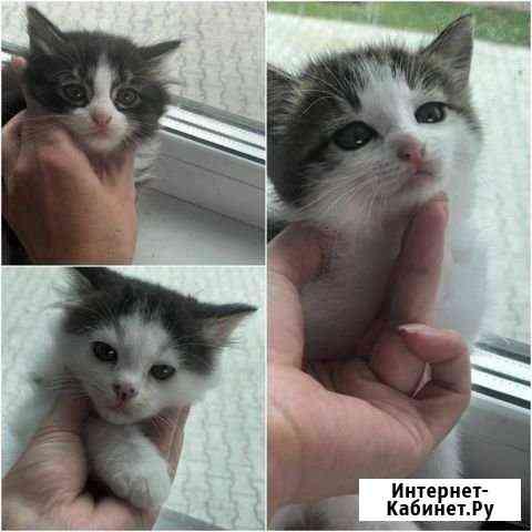 Кошка Хабаровск