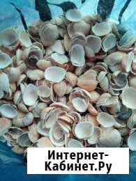 Ракушки для аквариума Рязань