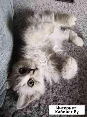 Миленькая кошечка ищет хозяина Липецк
