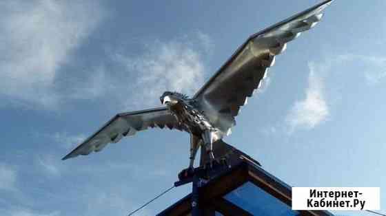 Беркут (орел) Сыктывкар