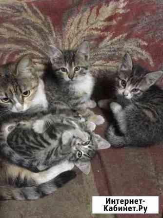 Котята в хорошие руки Тверь
