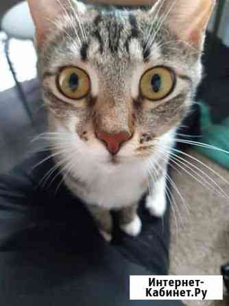 Кошка Ярославль