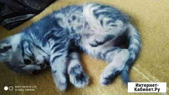 Кошка Ферсманово
