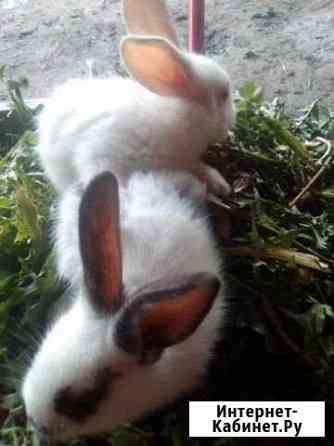 Продаю кроликов 1месяц жизни Новогуровский