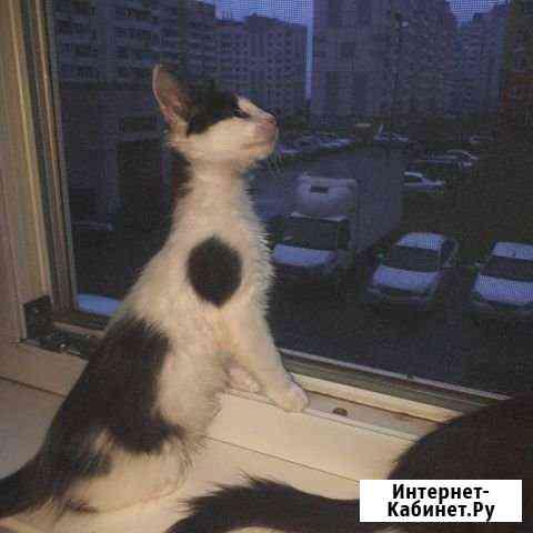 Котёнок Ульяновск