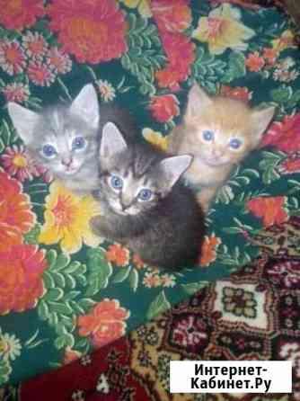 Котята в добрые руки Смоленск