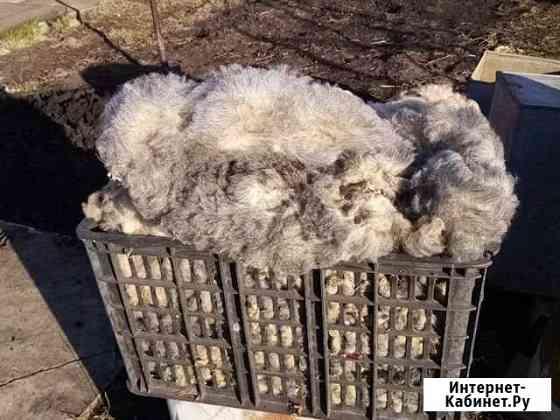 Шерсть овечья Батырево