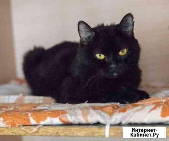 Кошка молодая бесплатно Екатеринбург