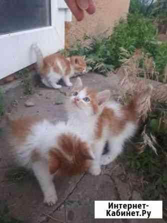 Кошка Астрахань