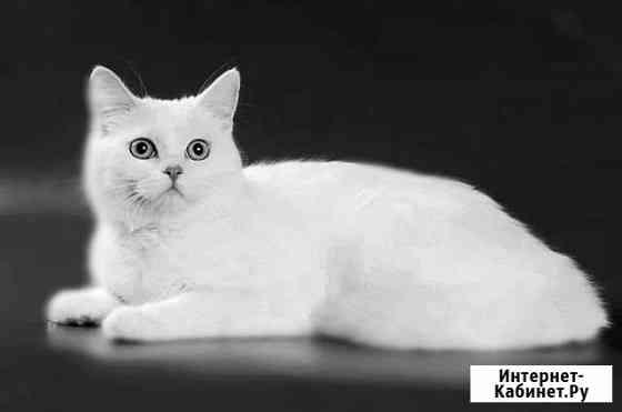 Нужна кошка для вязки Маркова