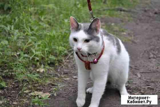 Кошка Пенза