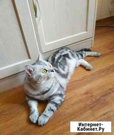 Вязка. Котик ждёт кису Рязань