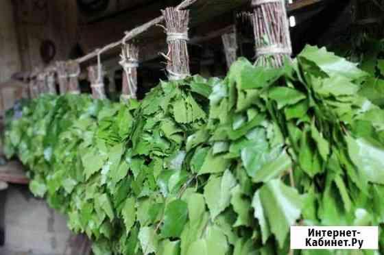 Свежие березовые и пихтовые веники для бани Сыктывкар