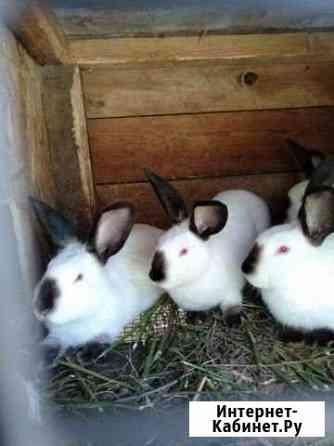 Кролик Рязань