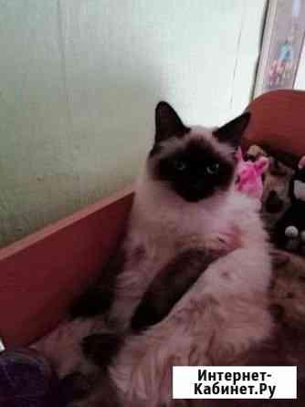 Кошка Нижний Тагил