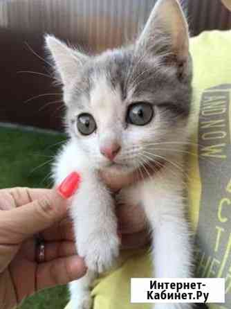 Котёнок в дар Нижний Новгород