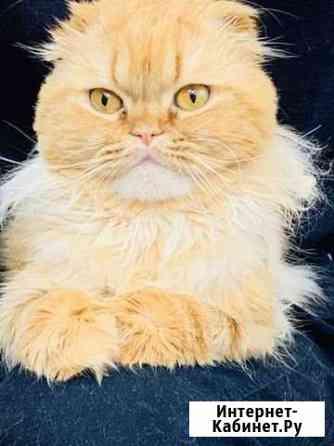 Кот рыжий Иркутск