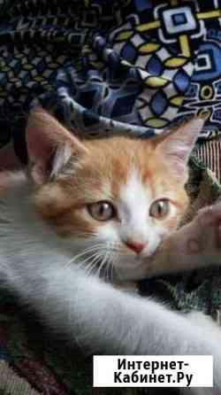 Котята Майкоп