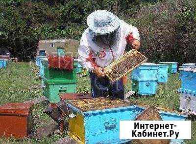 Мёд натуральный Иркутск